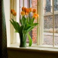 tulips window