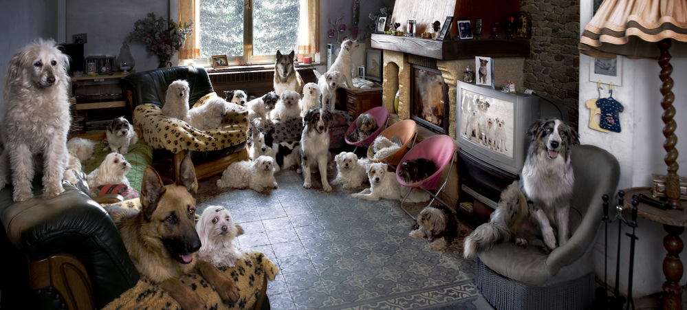 24 Dogs